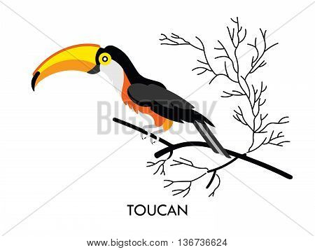 Cartoon african Toucan bird. Vector cartoon african bird made in flat style. Isolated wild african Toucan. Cartoon wild african bird background. Isolated african Toucan.