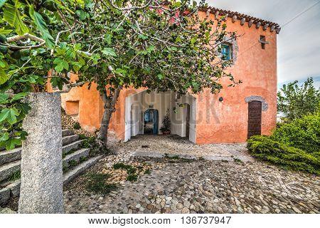 fig tree and rustic building in Costa Smeralda Sardinia