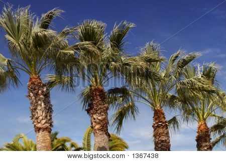 Palm Trees Against A Deep Blue Sky In Los Angeles