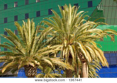 Palmeras frente a un edificio de azul en Los Ángeles y verde