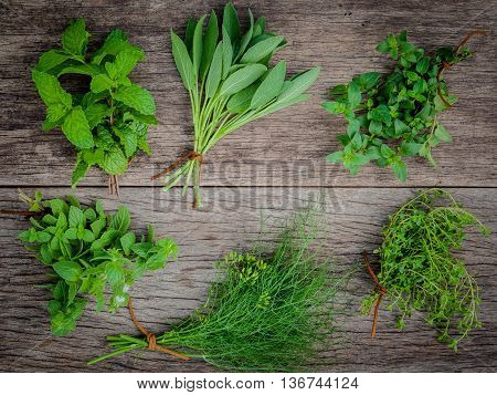 Various Aromatic Herbs And Spices From Garden  Green Mint ,fennel ,oregano, Sage,lemon Thyme And Pep