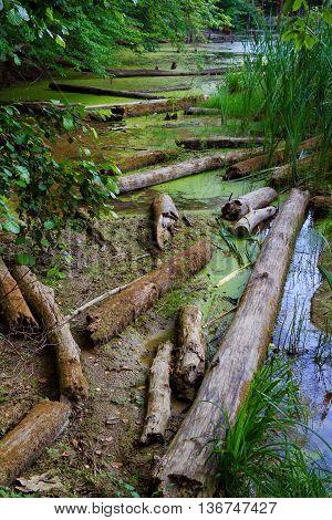 Kiev. Swampy Lake. Flooded Trees, Logs