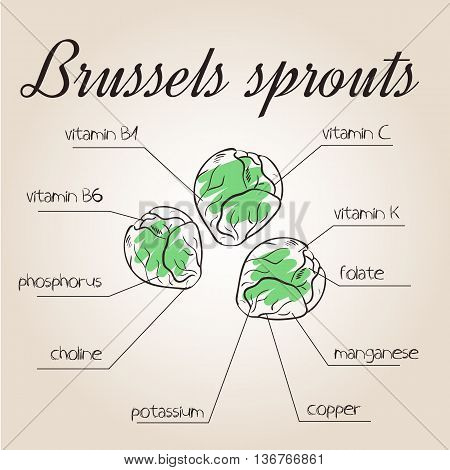 vector illustration of nutrients list for brussels sprouts.