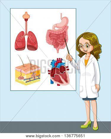 Doctor presenting different anatomy illustration
