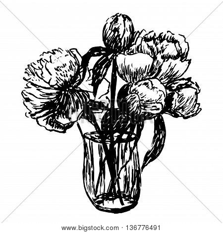 drawing delicate bouquet of peonies with buds in a glass vase sketch hand-drawn vector illustration