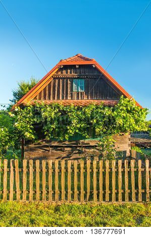 Old traditional wooden house with bird home and wine plant in Lonjsko polje, Croatia