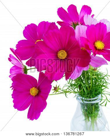 Posy of Cosmos pink flowers in vase close up isolated on white background