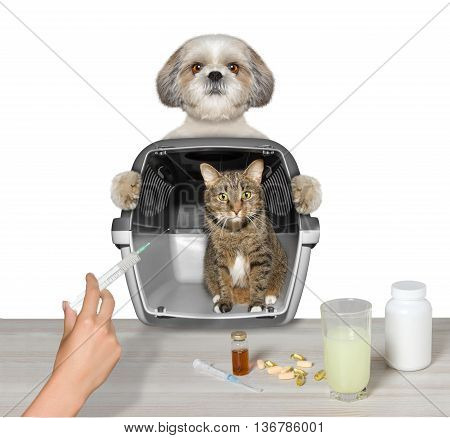 dog brought his cat friend to the vet -- isolated on white
