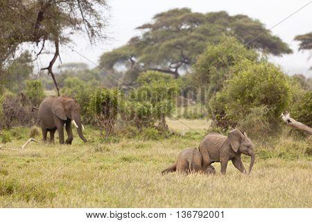 Baby Elephants, Kenya