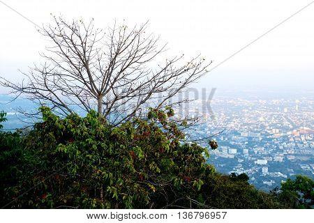 View of city , urban,Chaingmai Thailand,Top view