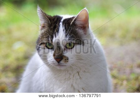 wild cat sitting on a grass background