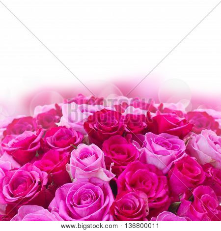 bouquet of pink and magenta fresh roses border over white background