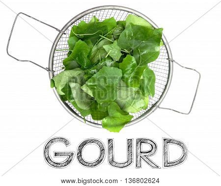 Gourd Fresh Vegetables in Stainless steel sieve on white background isolate have word freehand sketch.