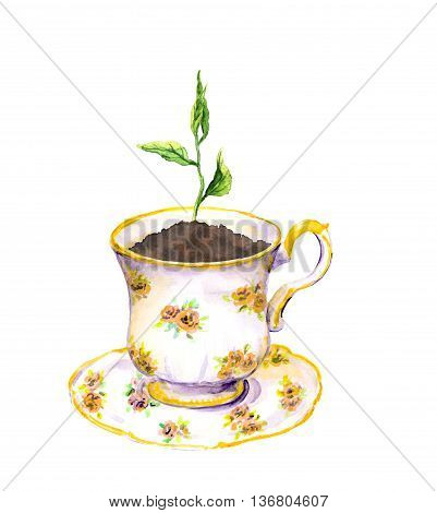 Spring sprout - green growing plant in tea cup. Watercolor