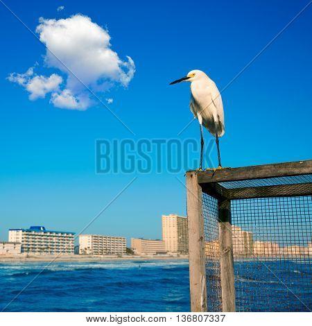 Daytona Beach in Florida shore from pier and sea bird USA