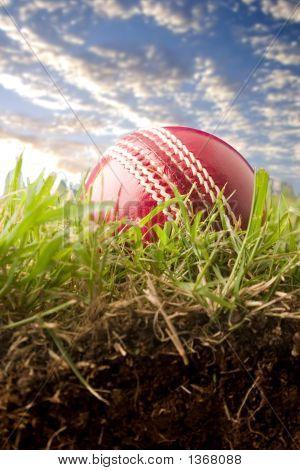 Pelota de Cricket en la hierba