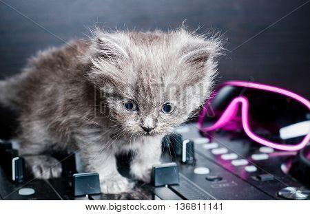 British shorthair kitten on the remote DJ