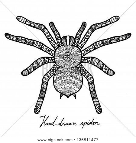 Hand drawn doodle design of spider for T-Shirt graphic,adult coloring book and tattoo - Stock vector Hand drawn doodle design of spider for T-Shirt graphic,adult coloring book and tattoo - Stock vector