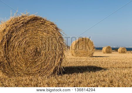 Hay rolls close up on mown wheat field on seashore