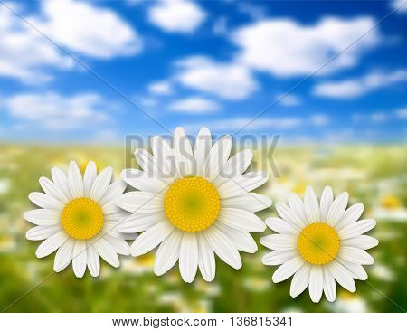 Flowers background - chamomile, daisy flowers and summer landscape.