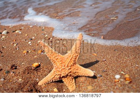Closeup of starfish on beach in front of tide. Happy summer concept. Sea star in bright day light on a beach.