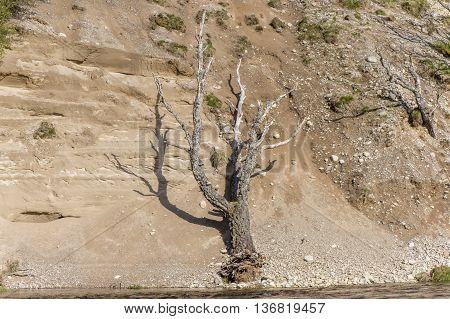 Tree on a sandbank beside a river