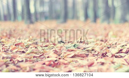 Blurred soft colors fall landscape background with fallen autumn leaves against a blurred woods. Seasonal natural scene. Instagram filter effect used. Copyspace for text