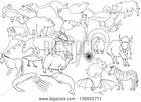 alphabetic animal line art illustration collection cutout