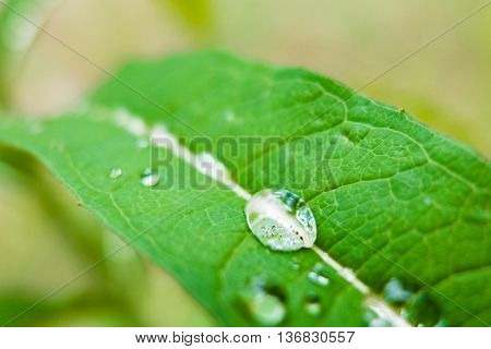 Drop of dew on a green leaf. Close-up shot of drops of water. Morning freshness of nature. Forest beauty of green vegetation in the summer.