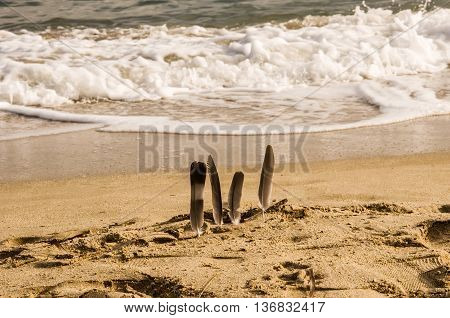 Seagull feathers inserted into beach sand. Blurred background with rolling waves. Horizontal.