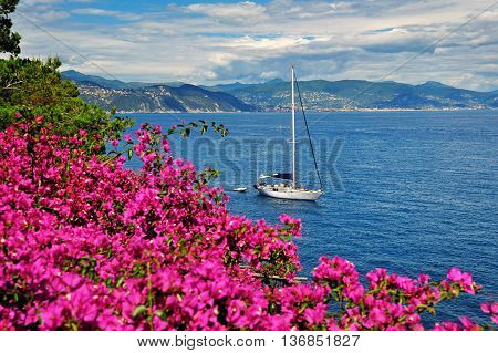 view of yacht with pink bougainvillea on the Italian Riviera.