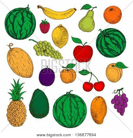 Colored sketched fresh apple, orange and mango, banana, lemon and peach, green and purple grapes, cherries and raspberry, watermelon, pineapple and pear, melon, avocado and apricot fruits. Healthy and diet dessert design