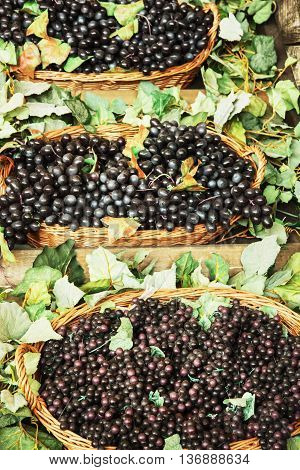 Different varieties of grapes in the wicker baskets. Market place. Healthy food. Vertical composition.