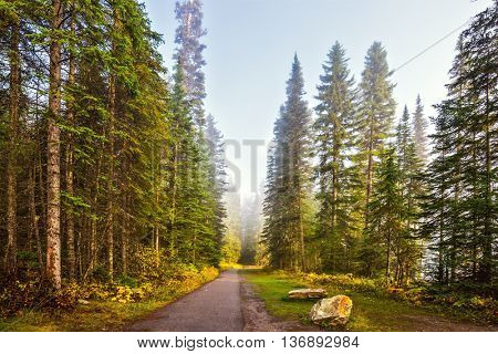 Morning mist on the Emerald Lake, Yoho National Park, Canada. Alley in the coniferous forest