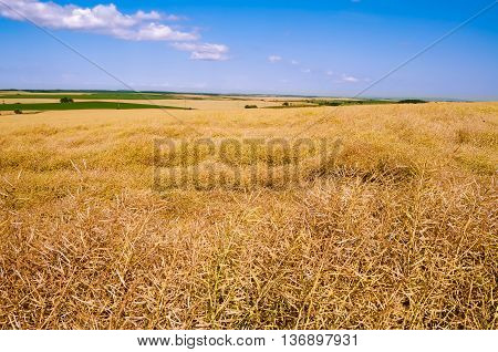 Rural Landscape With Fields Of Yellow And Green Colors