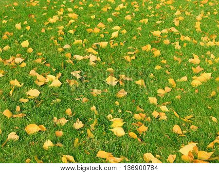 Fallen autumn leaves on green grass. The background.