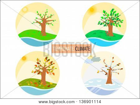 Round temperate climate illustrations / icons for four seasons
