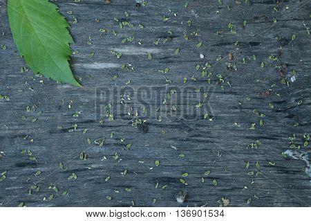tree wood texture greenery woodland effect beauty