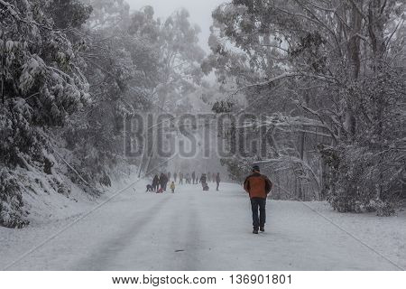 People Walking And Tobogganning Up The Snow Covered Road On Mount Donna Buang