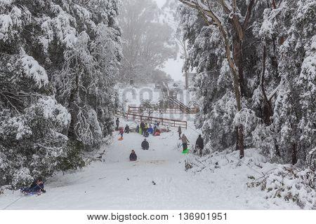 People Tobogganing On Mount Donna Buang Toboggan Run