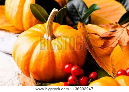 Autumn pumpkin and yellow leaves. Selective focus.