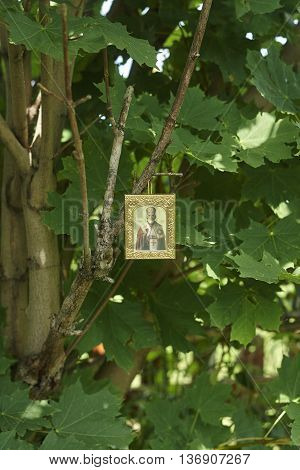 Saint Nicholas icon on green canadian maple tree close up