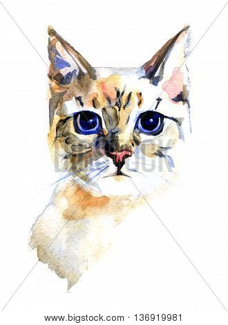 watercolor portrait of the cat on white background