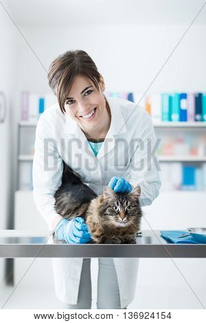 Veterinarian Examining A Cat On The Surgical Table