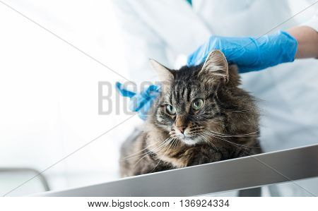 Veterinarian giving an injection to a cat on a surgical table vaccination and prevention concept