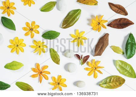 Yellow flowers, green leaves with white pebble stones
