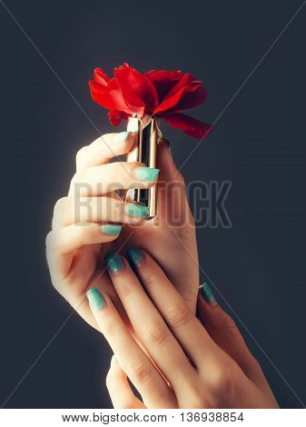 female hands with tender skin and blue manicure holding rose flower with soft petals red color in lipstick on grey background