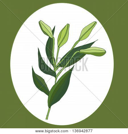 Hand drawn light green lily flowers. Vector Illustration.