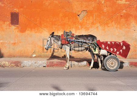 Donkey in Marrakech