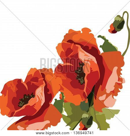 Vector Watercolor Poppies. Illustration for greeting cards invitations texture textile backgrounds
